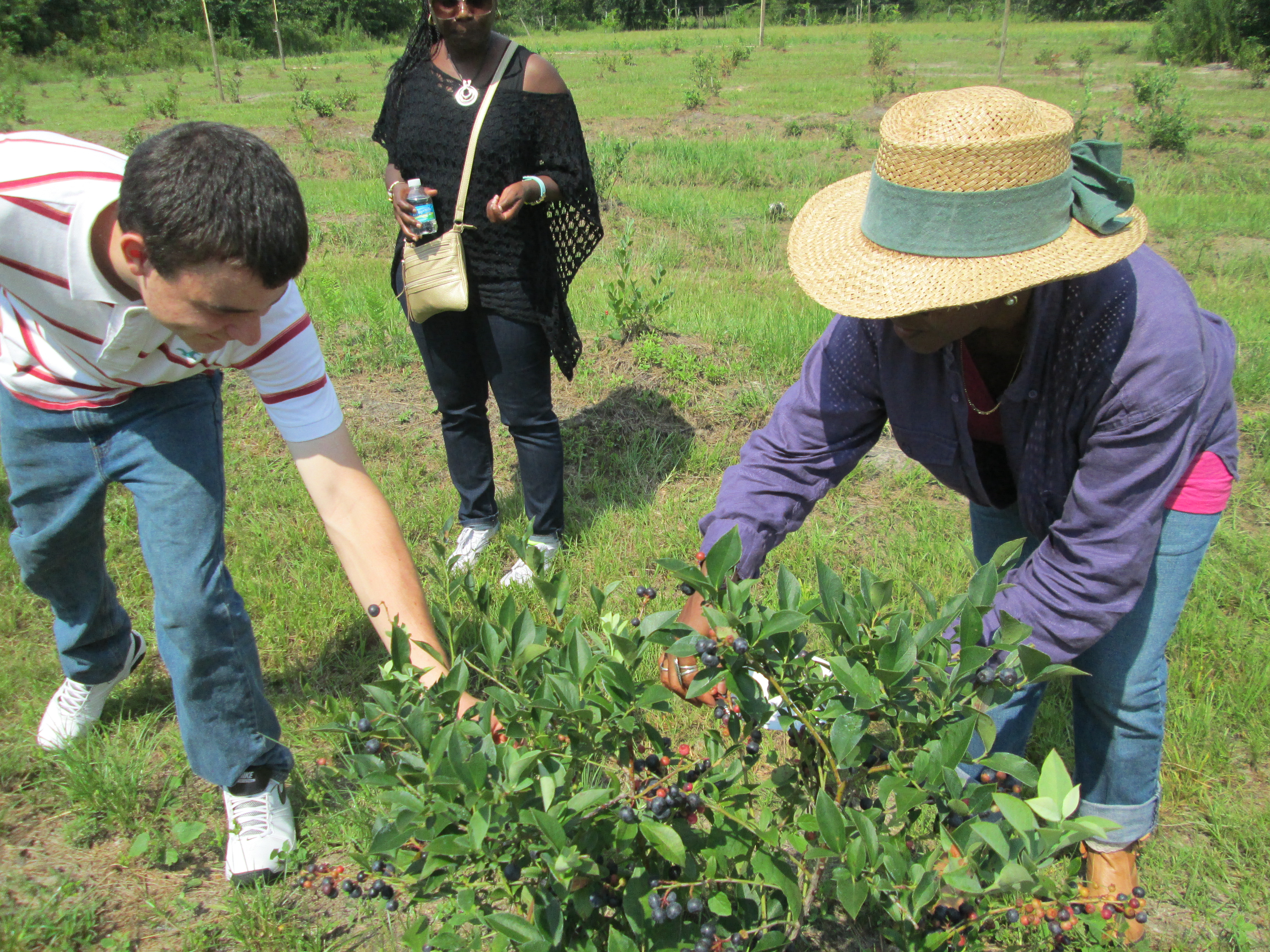 Blueberry U-Pickers at Clarke's Midway Mixed Farm in Madison County