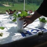 Backyard_Gardening